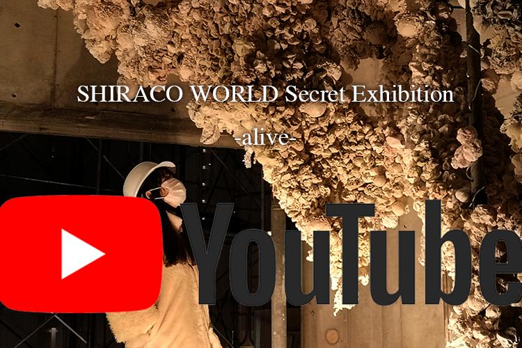 『SHIRACO WORLD -alive-』動画アップしました!